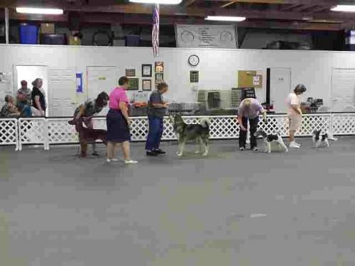 Events held by the Champaign Illinois Kennel Club
